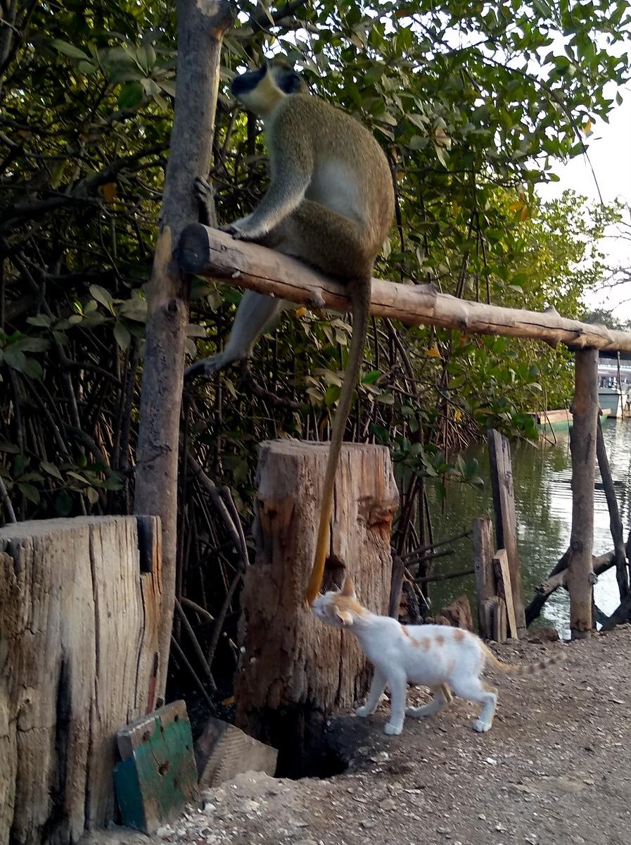 Half Die ärgert die Affen