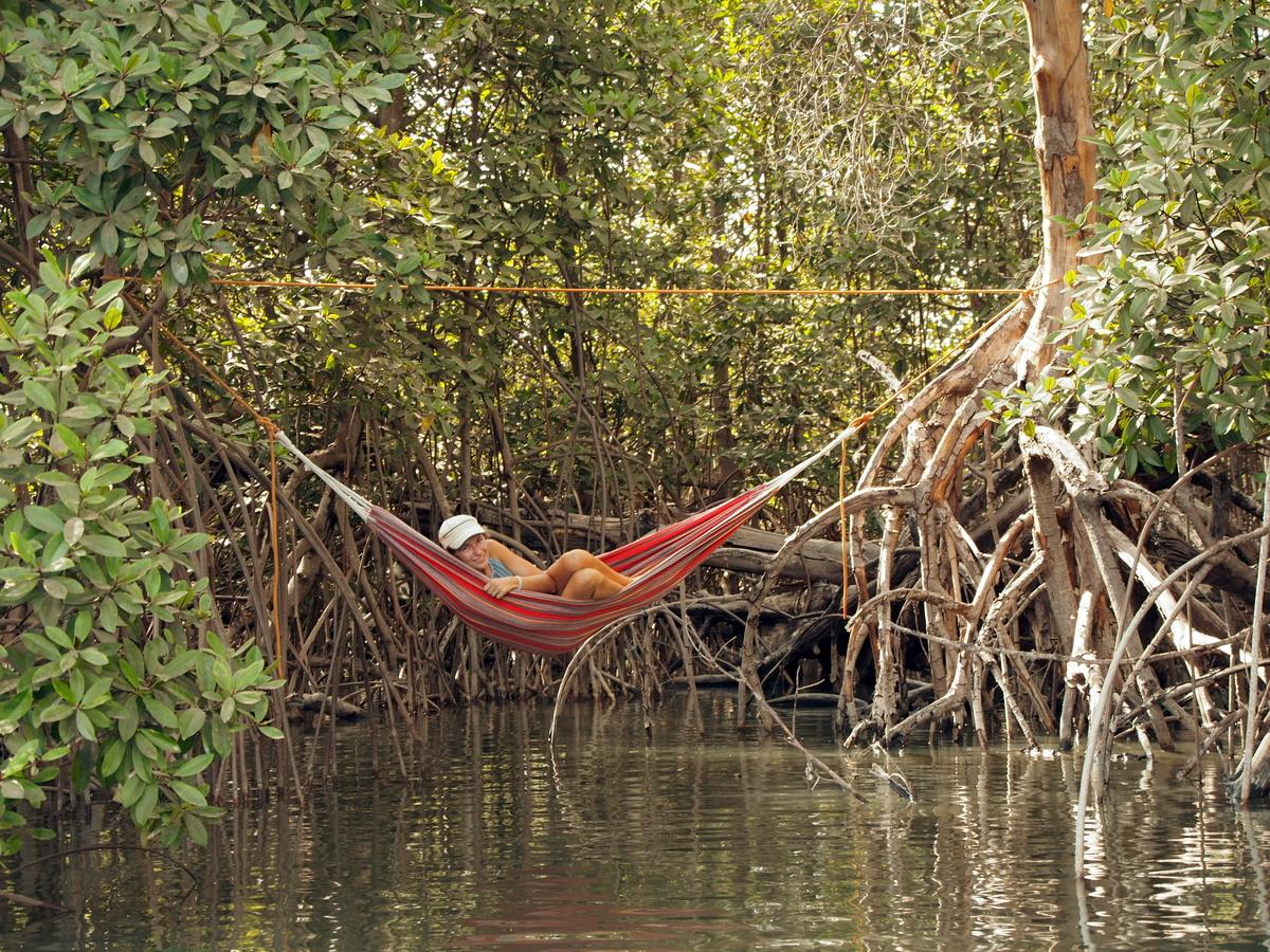 """""""Abkühlen"""" in den Mangroven"""