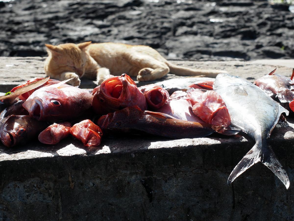 Der Fischmarkt von Ponta do Sol