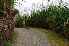 Zuckerrohrplantagen entlang der Straße